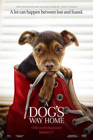 A Dog's Way Home (2019) DVD Release Date