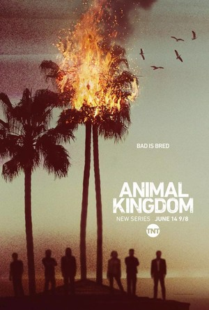 Animal Kingdom (TV Series 2016- ) DVD Release Date