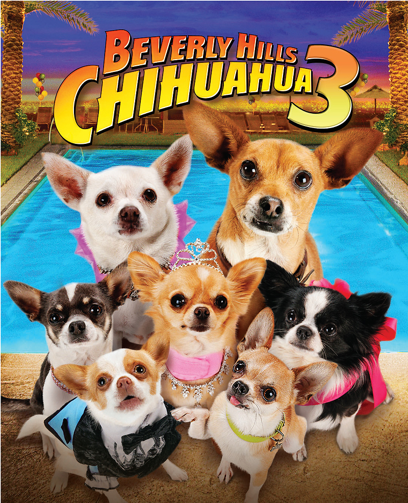 chihuahua movies beverly hills chihuahua 3 dvd release date september 18 2012 9371